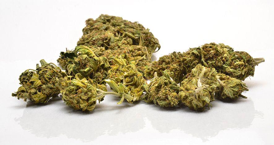 Cannabisdolden