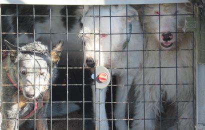 Fünf verwahrloste Hunde im Auto aufgefunden