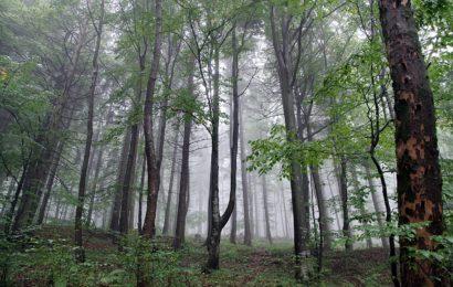 Mann hat sich im Wald vergraben