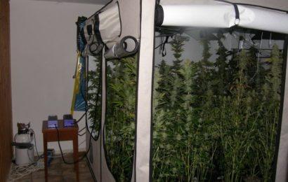 Professionelle Marihuana-Indoor-Plantage  ausgehoben