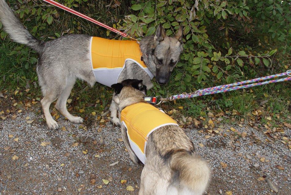 Symbolbild Rettungshunde Foto: Pressedienst Wagner