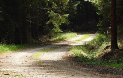 Rasenschnitt im Wald entsorgt