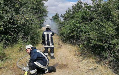 Brand eines Bahndamms und Freiflächen im Bereich zwischen Hiltersdorf und Freihöls