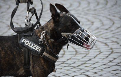 Verdacht der Entführung in Regensburg führt zu größerem Polizeieinsatz