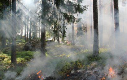 Brand eines kleinen Waldstücks