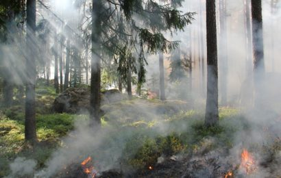 Waldbrand bei Hessenreuth / Tyrol