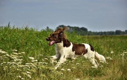 Hund beißt Achtjährige in Teublitz in den Bauch