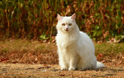 Tote Katze in  Hopfau