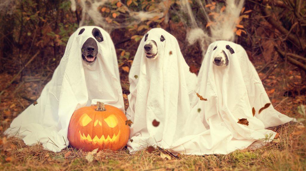 Symbolbild: Halloween