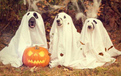 Bayerns Innenminister Joachim Herrmann mahnt zur Zurückhaltung an Halloween