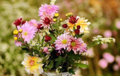 Blumenstrauß statt Verwarnung