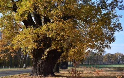 Baum mit Hakenkreuz beschmiert