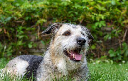 Verkehrsunfall mit Hund in Waldsassen