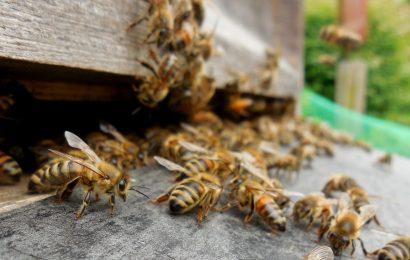 Diebstahl eines Bienenstocks bei Eiglasdorf