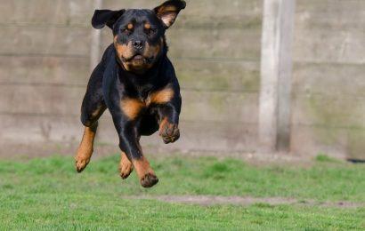 Beim Spazierengehen von Hund gebissen