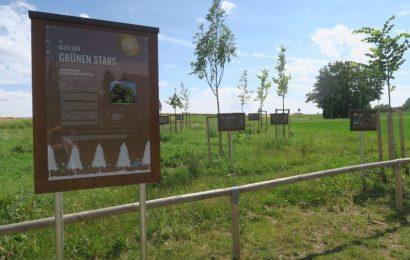 Nachhaltige Projektideen im Landkreis Amberg-Sulzbach gesucht – Bis zu 1000 Euro-Förderungen warten