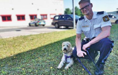 Hund aus völlig überhitztem Fahrzeug in Amberg befreit