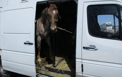 Waidhauser Zöllner stoppen zwei Pferdetransporter