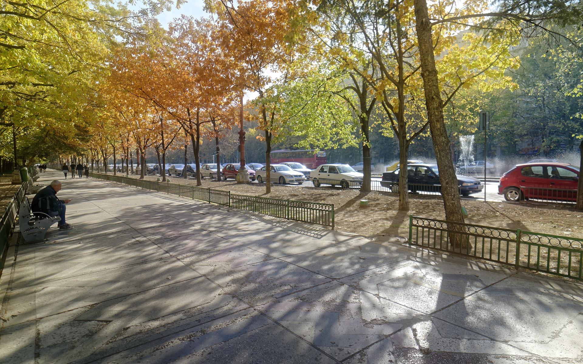 Diebstahl von Straßenbäumen in Burglengenfeld